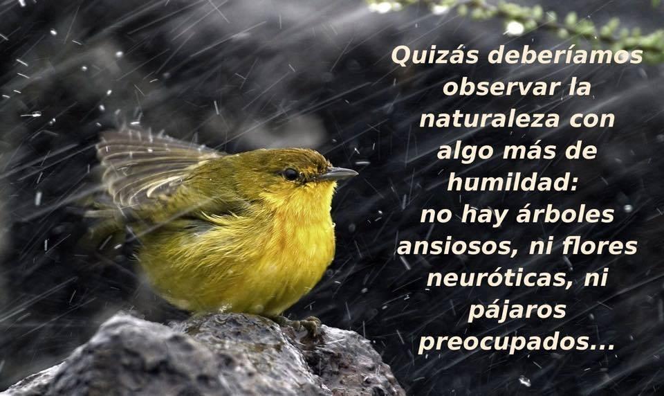 Frases De Amor Con Imagenes De Naturaleza: Quizás Deberíamos Observa La Naturaleza: