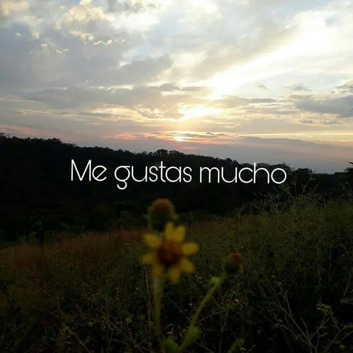 Me Gustas Mucho Frasespw