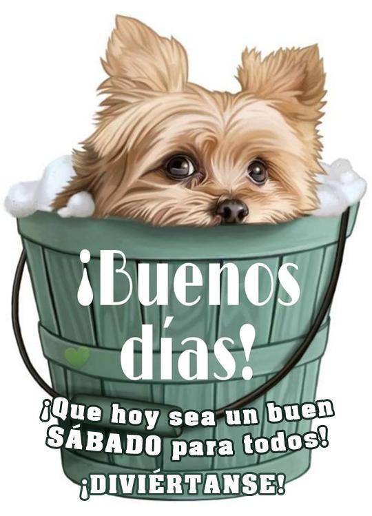¡Buenos días! Que hoy sea un buen sábado para todos