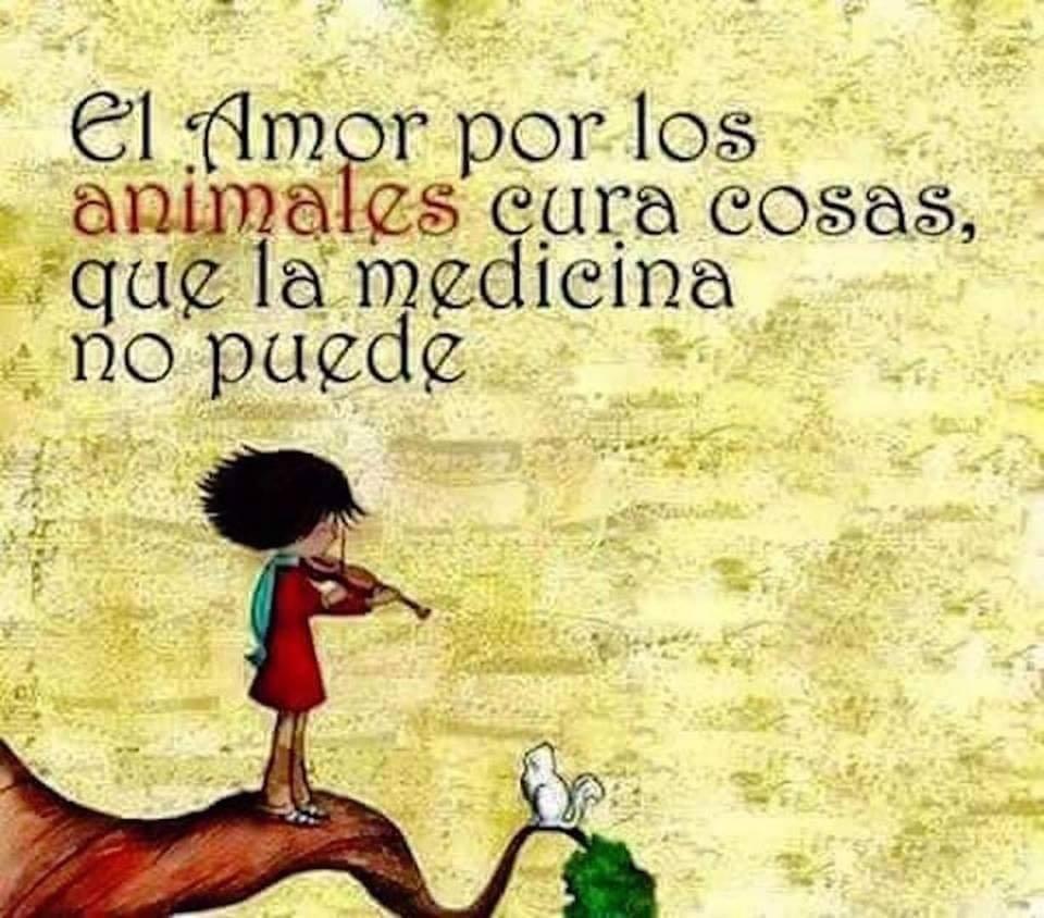 El amor por los animales cura cosas, que la medicina no puede