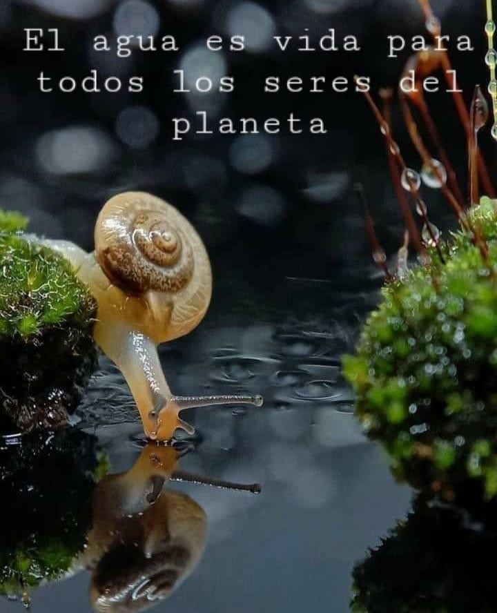 El agua es vida para todos los seres del planeta