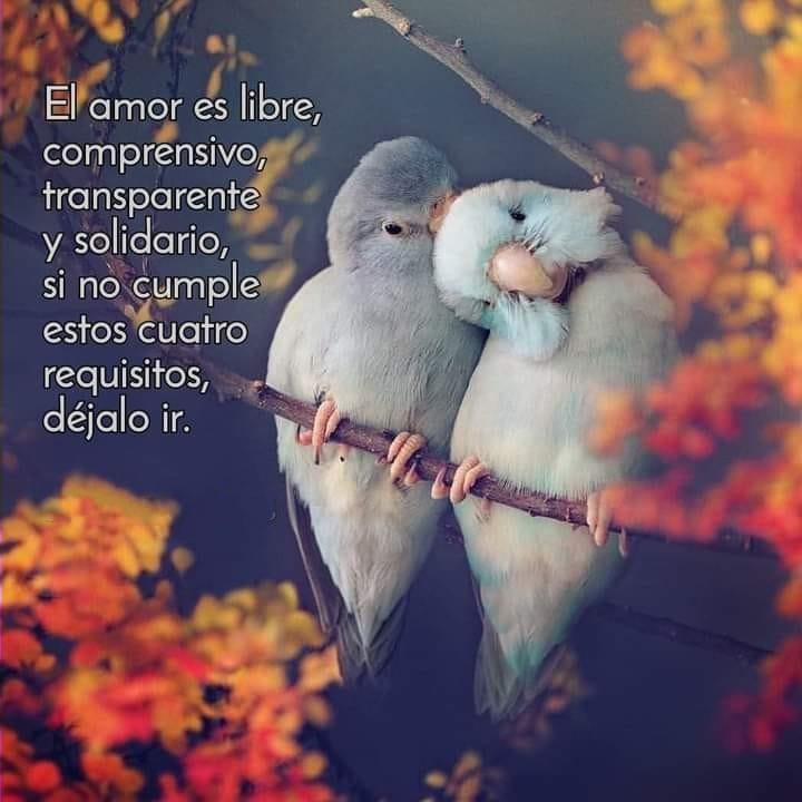 El amor es libre, compresivo, transparente y solidario