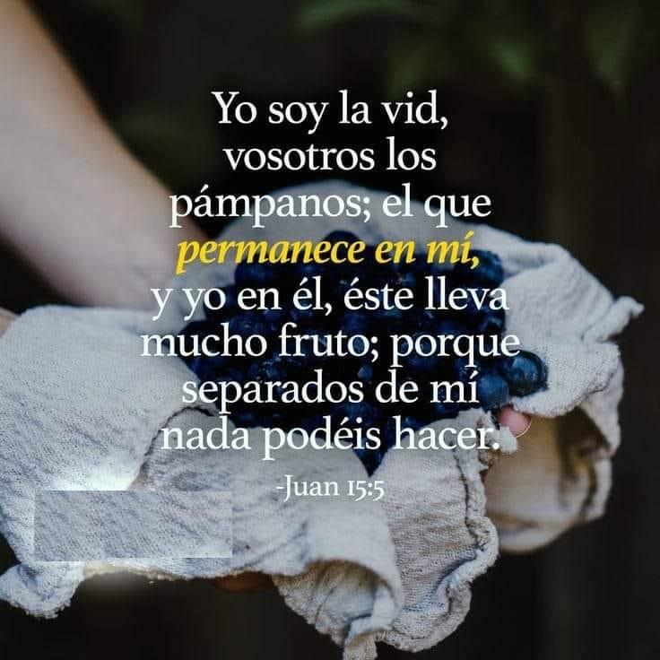 Juan 15:5 Yo soy la vid, vosotros los pámpanos; el que permanece en mi y yo en él