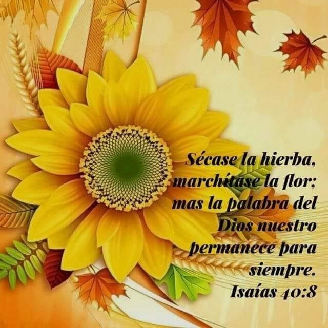 Isaías 40:8 Secarse la hierba, marchitase la flor